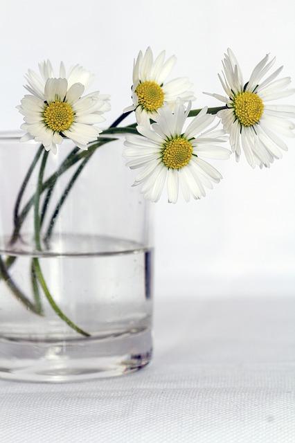 8. Extinde viata plantelor