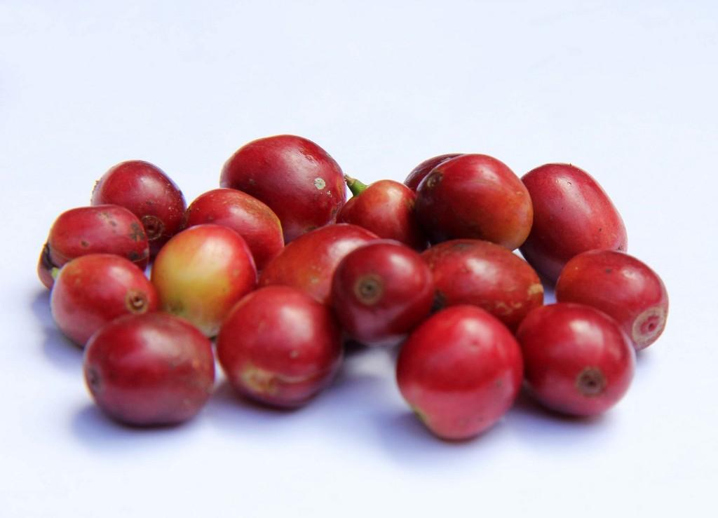 Cafeaua provine dintr-un fruct comestibil.Fructul de cafea este dulce și are gust de pepene, apă de trandafiri  și hibiscus în același timp.