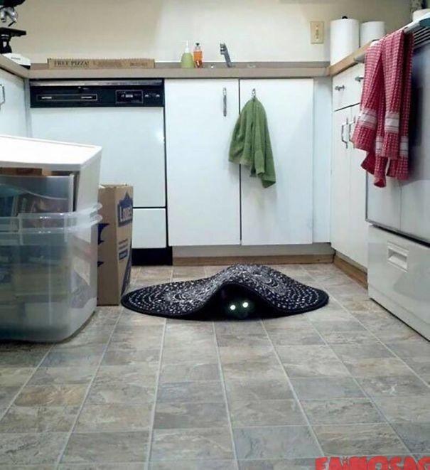 Portal cu pisică