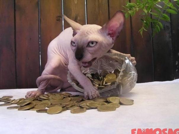 Pisica lacoma