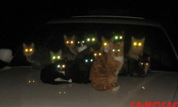 Ai venit in cartierul gresit, multe pisici pe capota unei masini