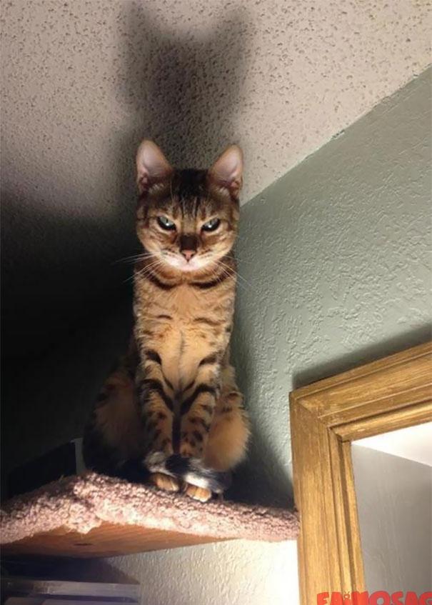Ce vad in fiecare noapte inainte de culcare pisica diabolica