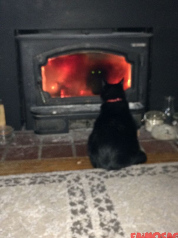 Pisică in fata unui seminei cu ochi de diavol