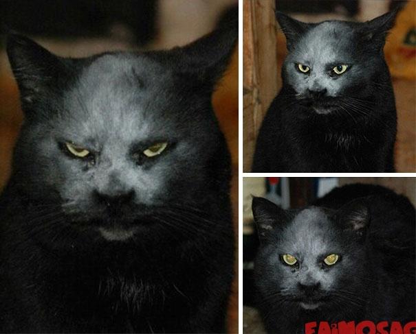 Pisică cu făină pe față foarte supărată