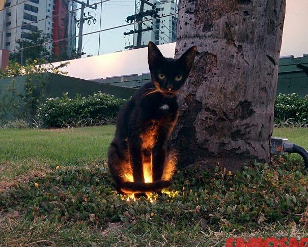 Pisică care sta pe un felinar in parc
